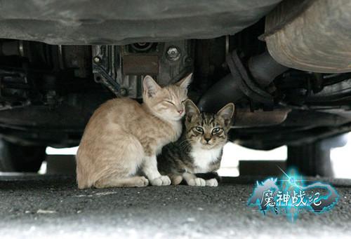 《魔神战纪》动物保护之流浪猫篇
