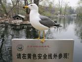 站岗的海鸥