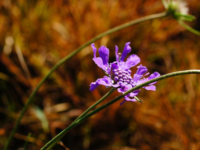 浪漫的小野花