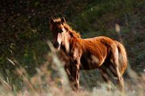 夕阳下的马