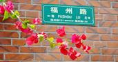 19 伸出墙外的红花