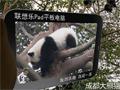 熊猫的乐趣