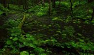 索尼A77实拍样片