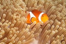 那些美丽的水下生物