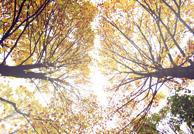 秋色之昆明植物园