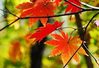 秋拍红叶八技巧