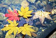 丹东凤城蒲石河森林公园红叶