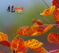 太原龙山红叶