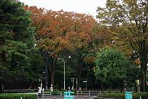 日本赛马场