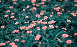 公路旁的野花