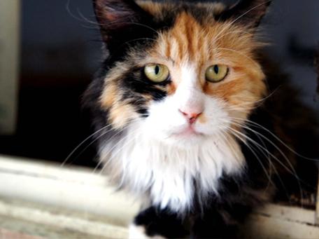 来福小院流浪猫