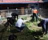 帮助小院拔杂草