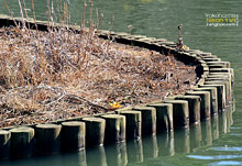 湖心木桩组成的优美曲线