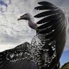 大鸟超频哥