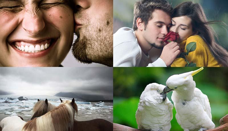 相爱的人一起看:28张浪漫到死的照片