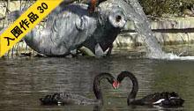 禽湖水暖鸭先知