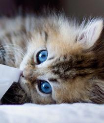 【壁纸】可爱猫咪
