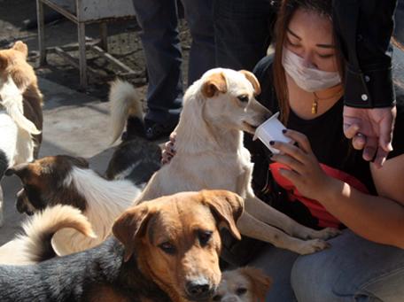 志愿者给狗狗喂酸奶