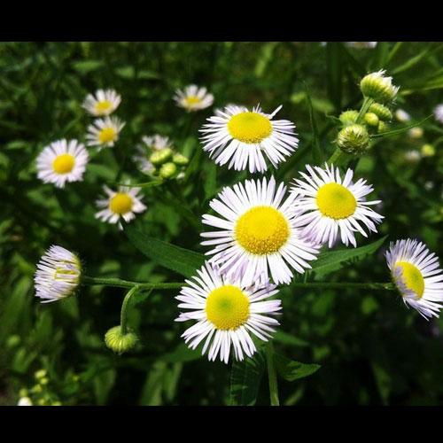 那些年拍过的花草